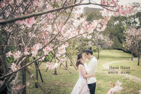 櫻花&繡球花季|拍婚紗
